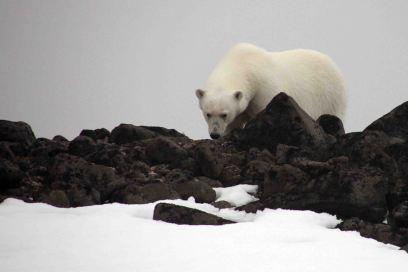 IMG_9529 polar bear adventuresofacouchsurfer