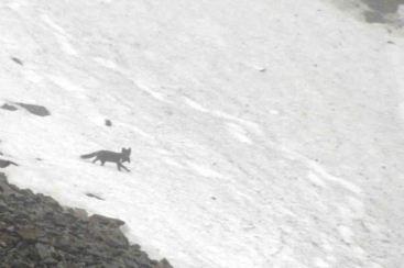IMG_9908 fox adventuresofacouchsurfer