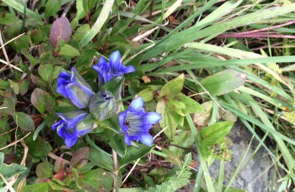 20160828_195959577_iOS flowers