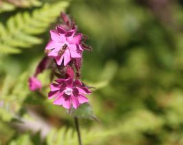 IMG_0376 flowers