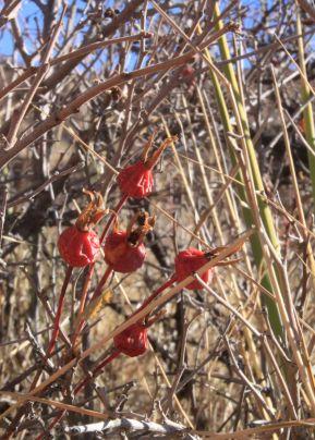 img_9397-berries
