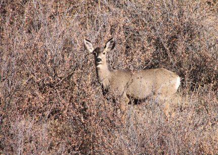 img_9415-deer