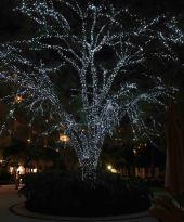 20161215_025322783_ios-tree