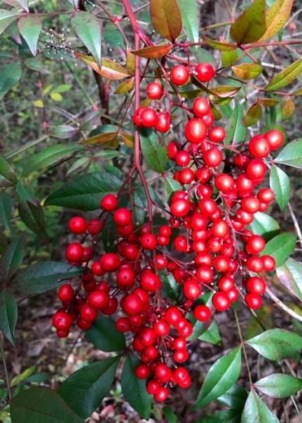 20170122_173314523_ios-berries