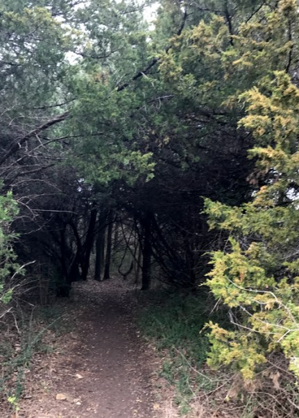 20170122_180252362_ios-tunnel-of-trees