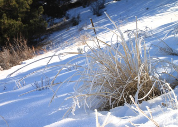 img_0562-frost