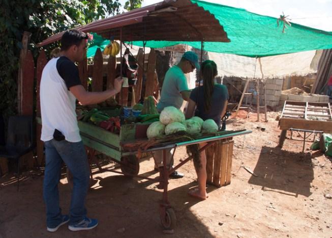 img_2139-veggie-stand