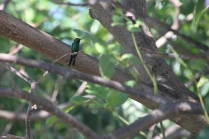 img_2246-bird