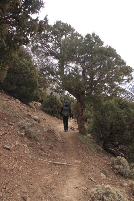 descending tizi mzik through junipers