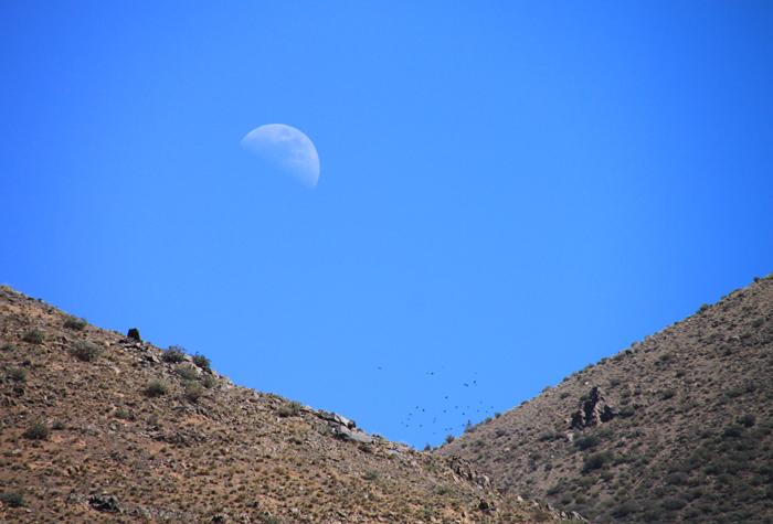 half moon over the mountain