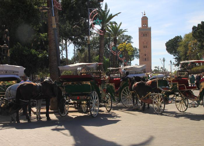 horse carriages at marrakesh medina