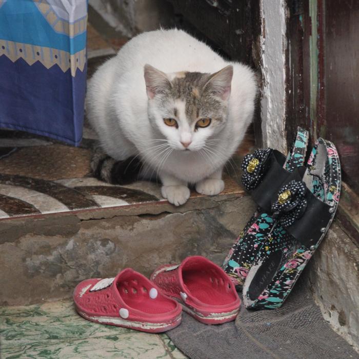 cat in rabat