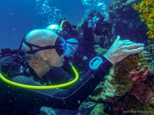 looking at the ornate ghost pipefish