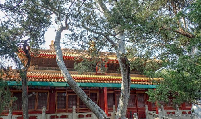 garden at Forbidden City in Beijing