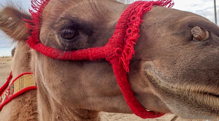 my camel in Elsen Tasarkhai, mongolia