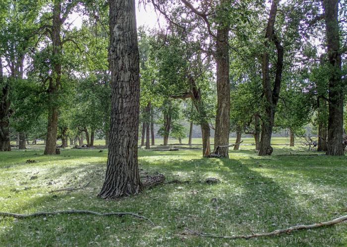 picnic under the cottonwoods