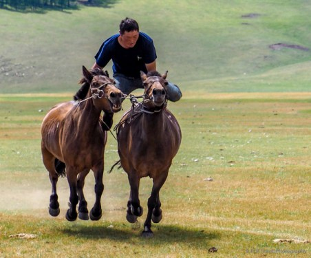mongolian cowboy jumping from horse to horse