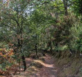 adventuresofacouchsurfercapriIMG_5388-5388
