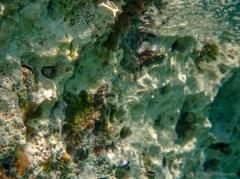 mantis shrimp in hole top left quadrant