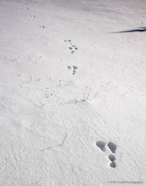 adventuresofacouchsurferbreckenridgeIMG_6239-6239