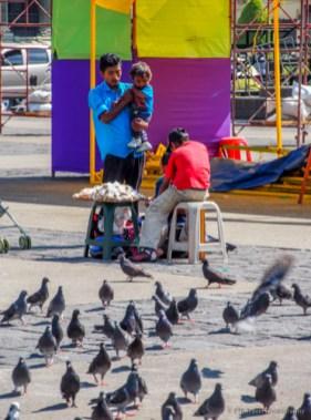 pigeons at Plaza de la Constitución