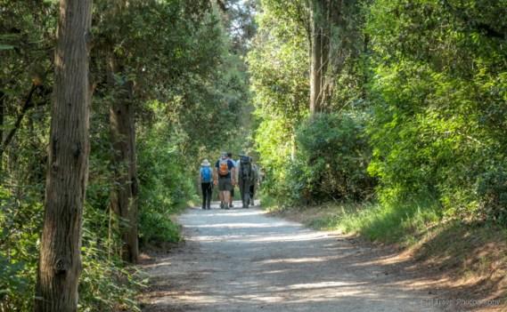 Golden Cape Forest Park