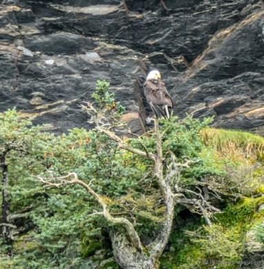 Mama eagle