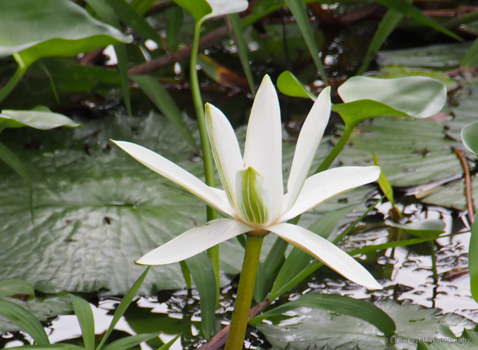 flower at indian village near panama city