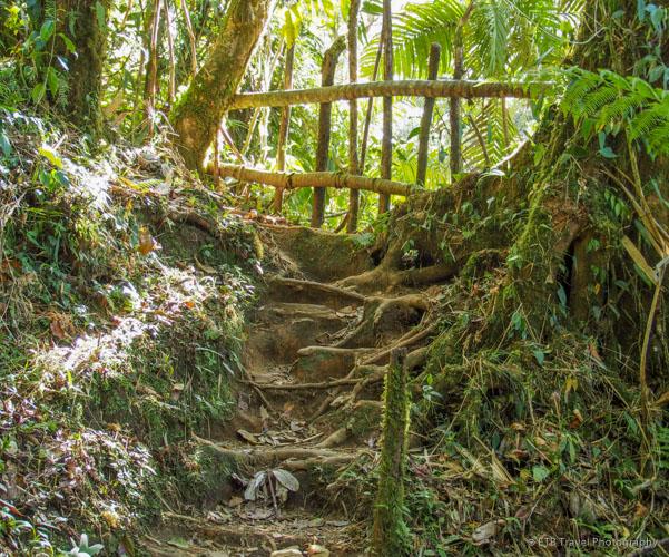 tree roots on Three Waterfalls Trail