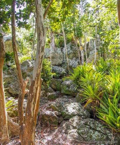 Parish Hill hiking trail