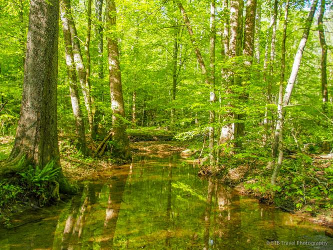 Yellowwood Lake Trail