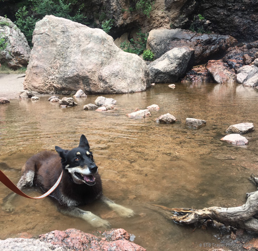 Sheena cooling off at Horsetooth Falls
