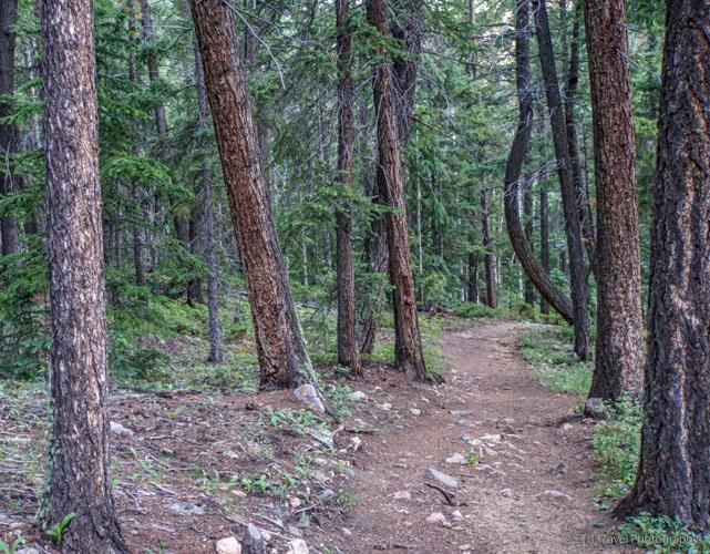 Three Mile Creek Trail