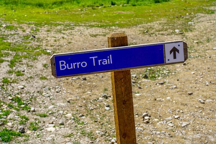 Burro Trail in Breckenridge
