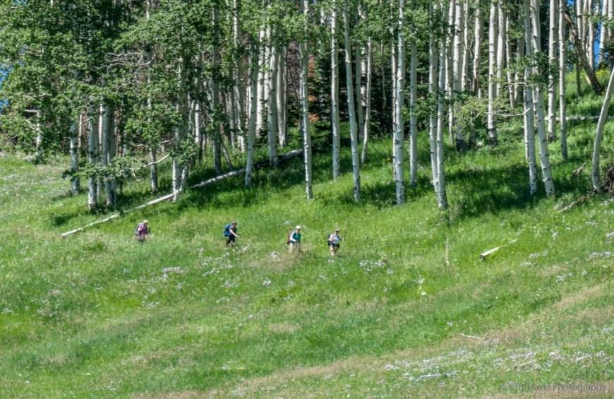 meadow on the Sneffels Traverse