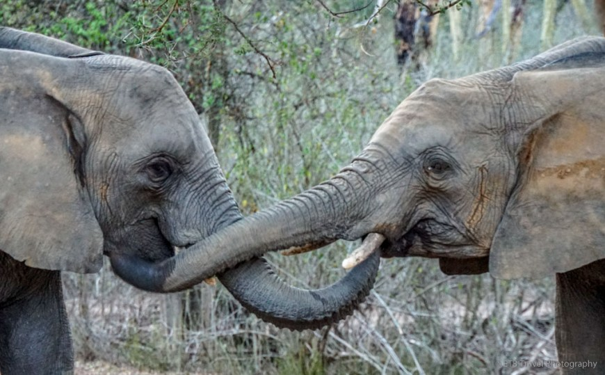 orphan elephants at Umani Springs