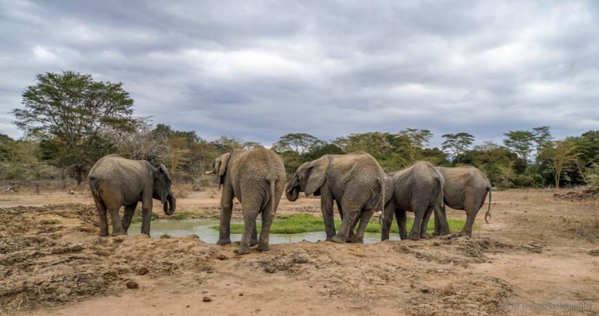 elephants at Umani Springs