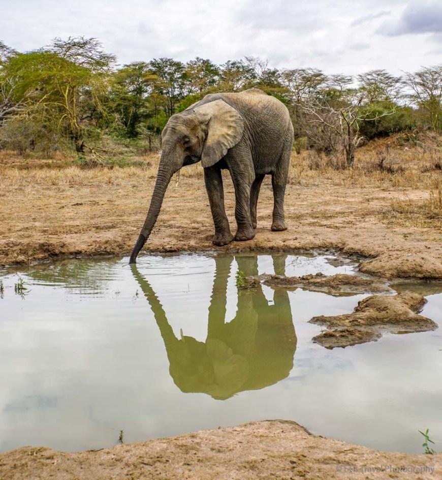 reflection of elephant at Umani Springs