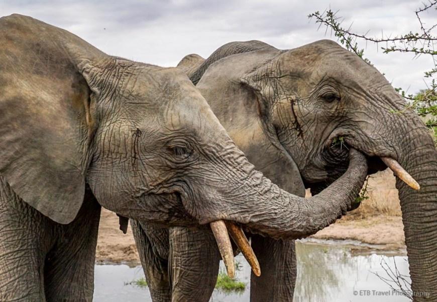 elephant friends at Umani Springs