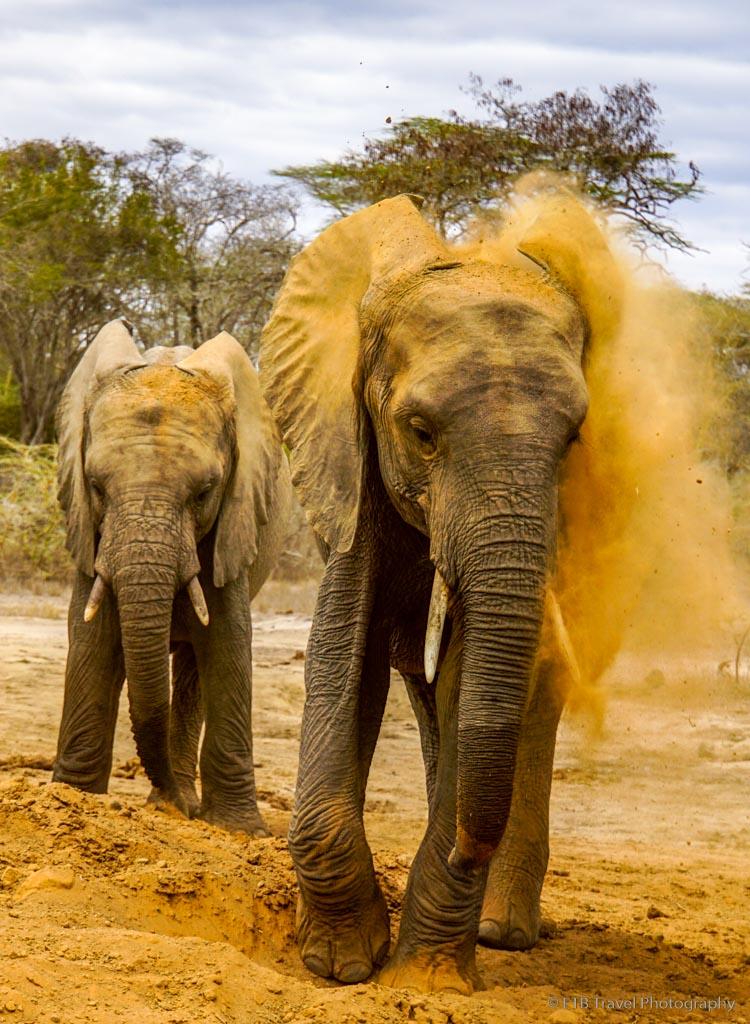 elephants taking a sand bath at Umani Springs