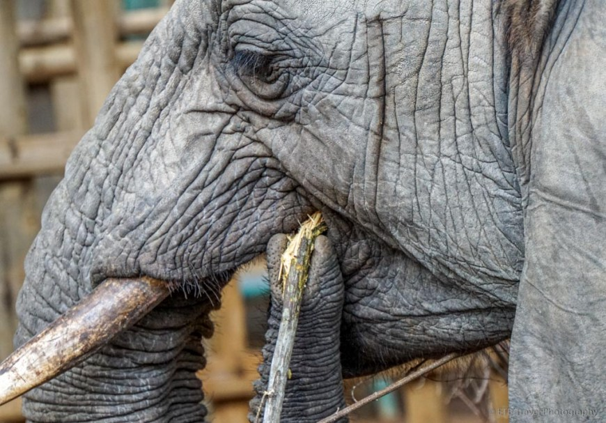elephant at the stockades