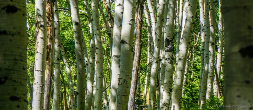 Aspen at Desolation Lake in Big Cottonwood Canyon