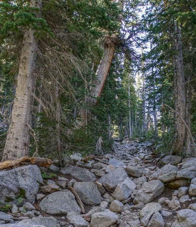 Red Pine Lake Trail