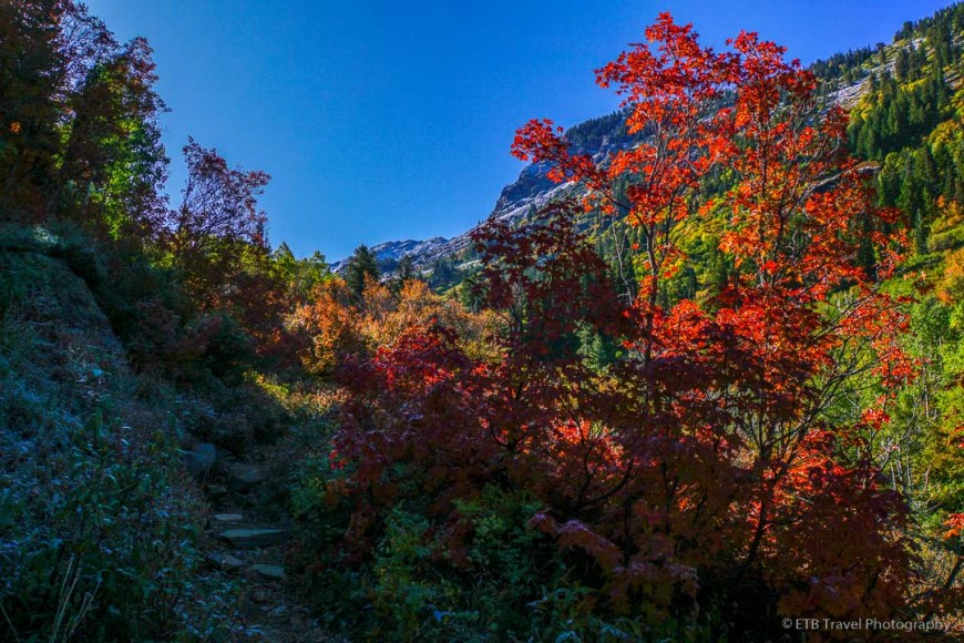 fall colors on Mill B South Fork Trail to Lake Blanche