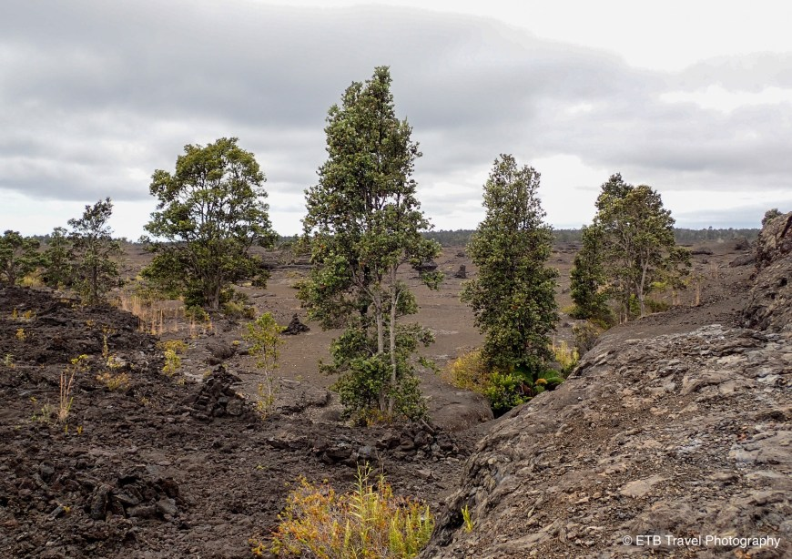 Napau Trail in Hawai'i  Volcanoes National Park