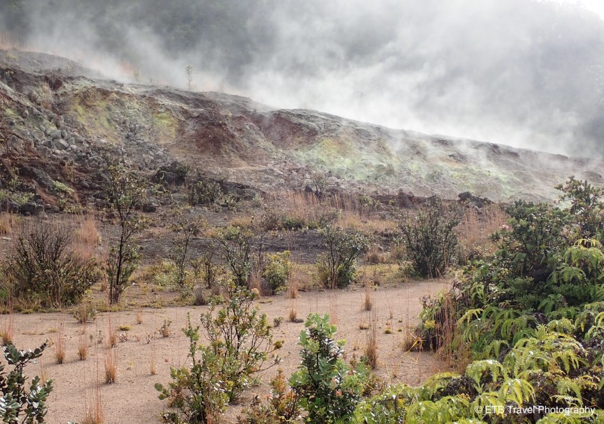 Sulphur banks trail in Hawaii Volcanoes National Park