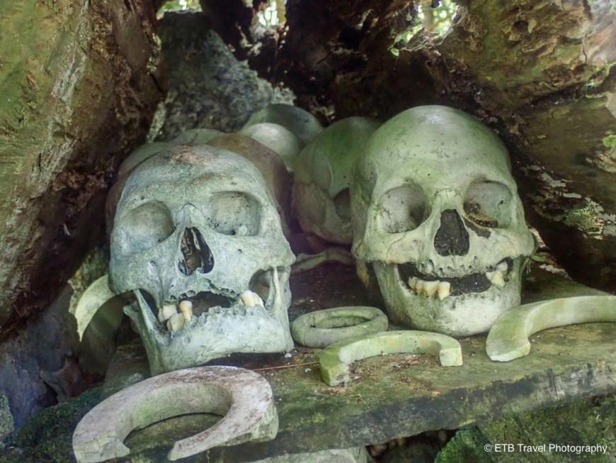 skulls on skull island near munda