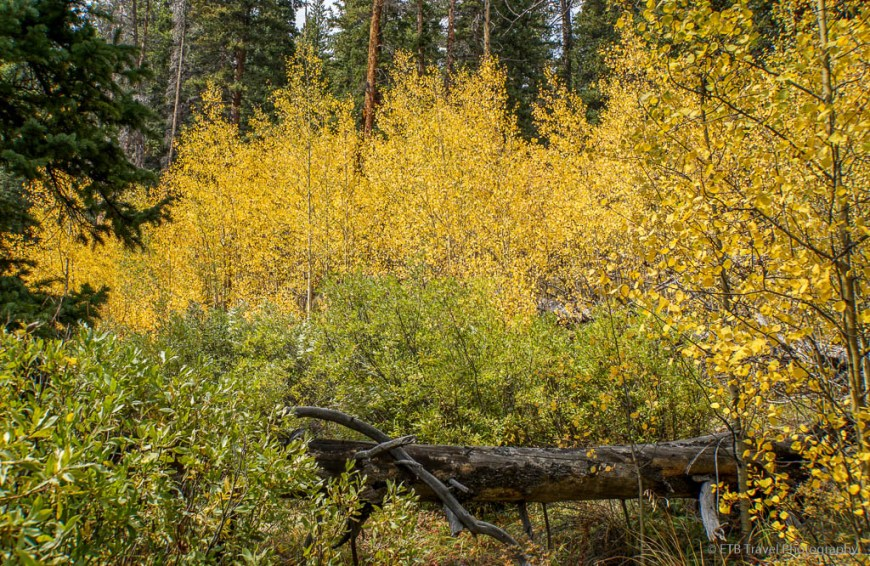 aspen on the gold dust trail