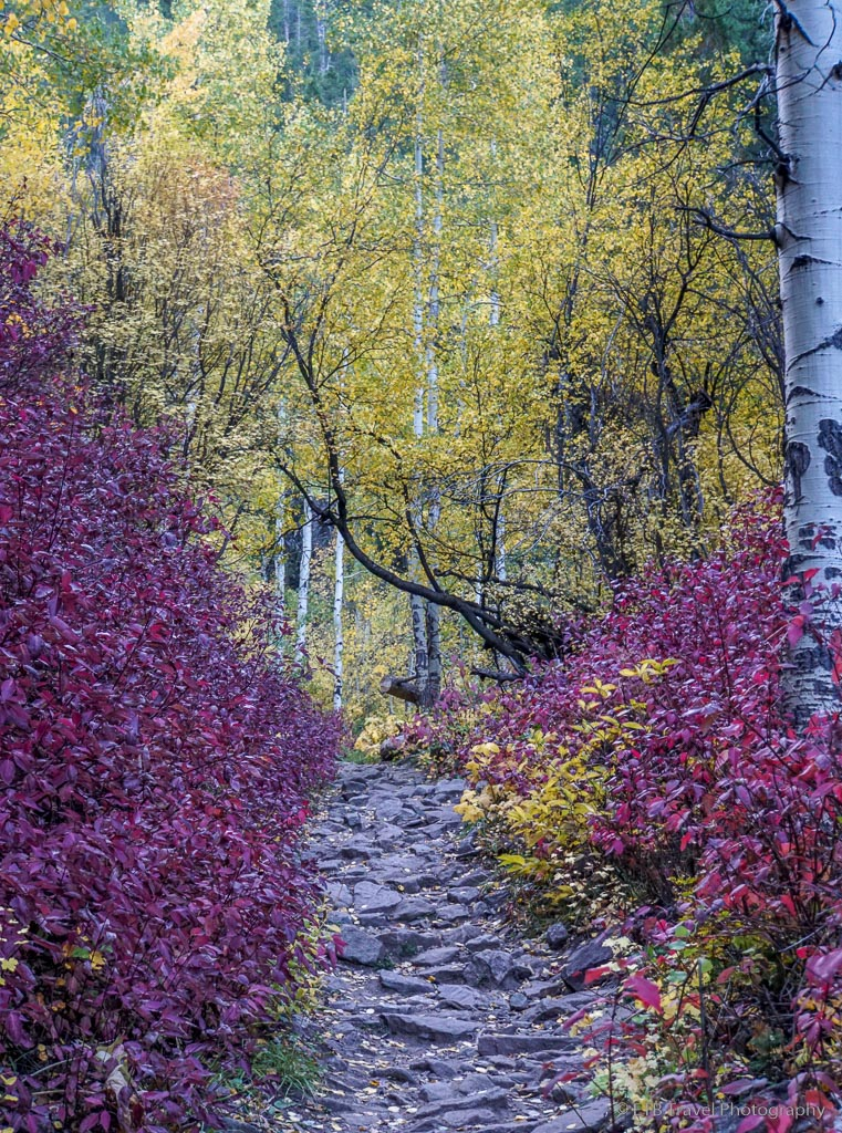 fall foliage on game creek trail