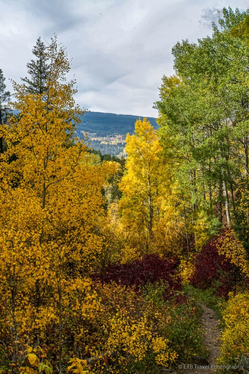 fall colors on game creek trail